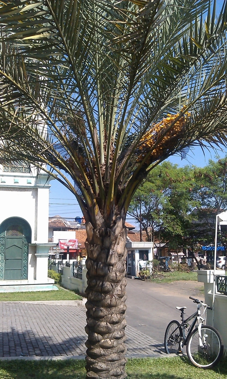 Kurma Al-Fajr Bandung Photo A. Rozak Abuhasan